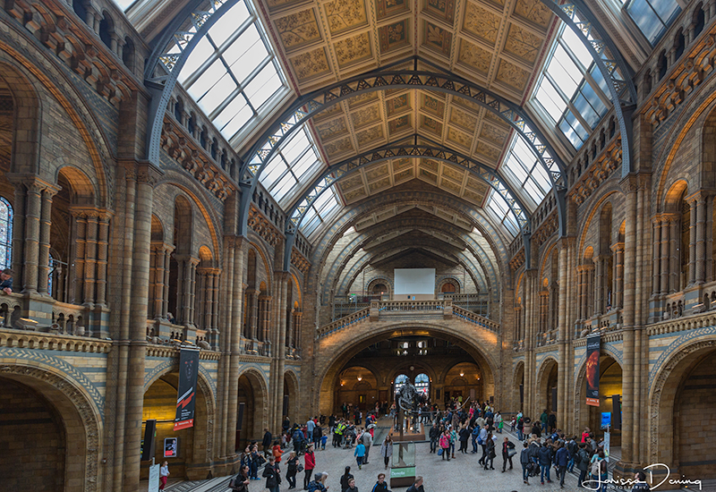 The main hall of the natural history museum, Knightsbridge, London